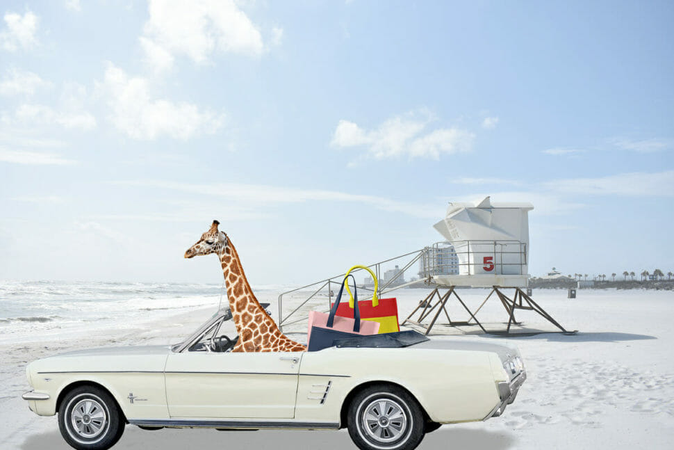 California beach, mustang stands on beach with Sophie the giraffe inside and LUC8K leather bags