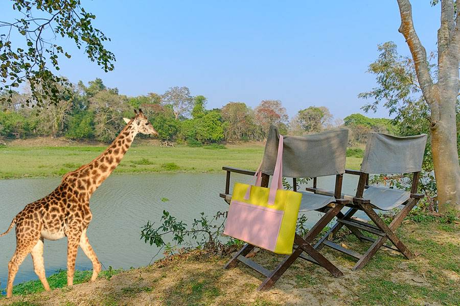 Sophie, Giraffe walking along river with a fancy handmade handbag hanging on deck chair