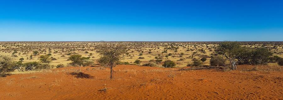 Landscape image of the Kalahari. Dry grassland with many trees and red ground